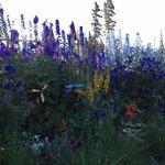 A border garden