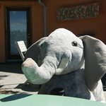 Elephant joined us for a drink :)
