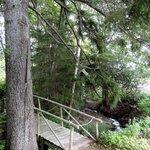Nice little stream with decorative bridge!