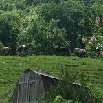 Horses at pasture.