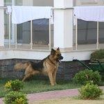 Guard resort