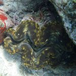 Exciting and colorfull marine life
