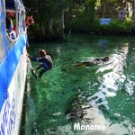 This was our second dive into the canal to interact with the manatee
