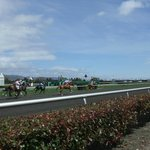 Horse racing from ground level