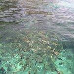 Dnorkeling trip to Rawa