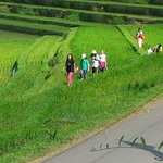 Rice field tracking