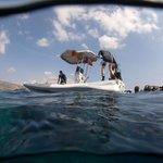 Surfacing the Shark Fin reef
