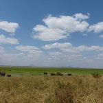 Les éléphnats du Tanrangire se dirigent vers le marécage