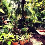 In the oasis area of the B&B