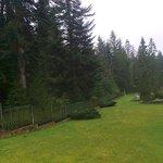 widok z Tarasu - obszar ogrodowy