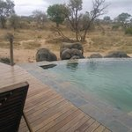 Elephants drinking in front of the Main lodge