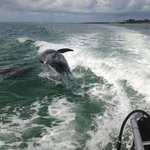 Another great dolphin shot behind the Island Girl