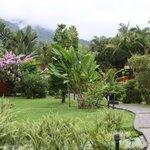 Uitzicht op de tuin