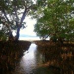 Die Mangrovenbäume befinden zwischen Strand und Meer; Zugang zum Boot bei Ebbe durch die Bäume