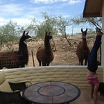 Photo de Desert Rose Bed and Breakfast