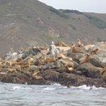 Sea Lions on the sea wall
