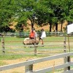 動物に乗ったり餌を与えたりできる牧場