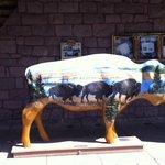 Buffalo to greet you