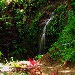 "Las Cascadas - ""The Falls"""
