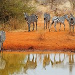 Selankay Conservancy game drive - photo taken from a viewing platform at the waterhole.
