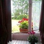 Fuchsia room window