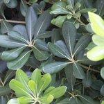 The greenery around the gardens of Dinas Paradise