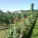 Jardin conservatoire de la tomate