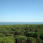 La pinera di Eracleamare vista dalla terrazza di casa.