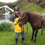 Laxnes Icelandic pony
