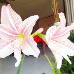 Pink Stargazer Flowers in the Garden