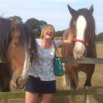 Prince and Gemma the Shire horses
