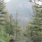 See the bear crossing the trail between us & the rest of the hikers behind us