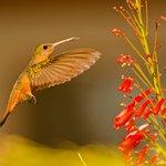 hummingbird on grounds