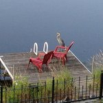 Early morning heron on the dock