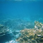 snorkling trip, beautiful sea of coral.