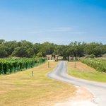 Vineyard entrance