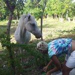 Veronika's horse