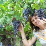 Mucha uva, excelente calidad y muy rica.