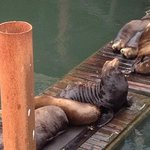 sea lions on the docks by the underwater garden