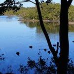 Lani's Island