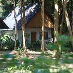 bungalows with real nature