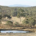 Gardens, Dam and Paddocks with views to Wombat State Forest