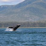 Whale song cruises Petersburg Alaska