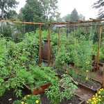 Vegetable and herb garden on the ground