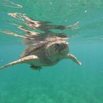 sea turtle excursion