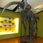 prehistoric mammoth bones