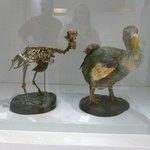 the dodo bird