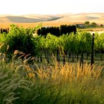 Walla Faces Vineyard
