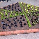 Botanic Vegtable Garden