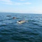 rencontre avec les baleines noires